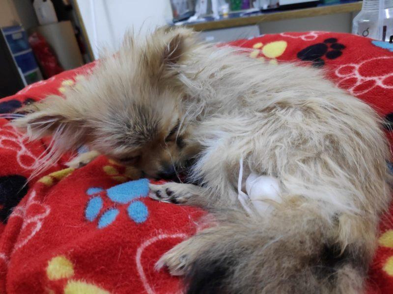 תמונה של מיה במרפאה – חלשה ויודה בזמן ההתקף בתת סוכר