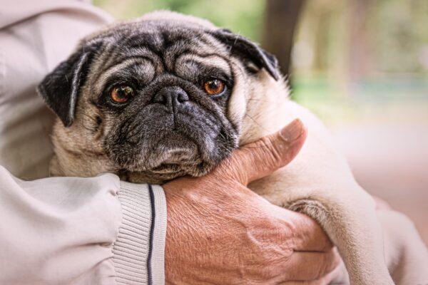 אי ספיקת כליות כרונית בכלבים וחתולים- chronic renal failure (CKD )